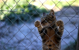 Cat, whiskers, paws, fence