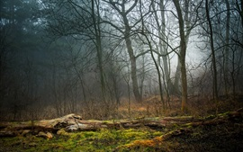 Forest, trees, fog, grass, moss