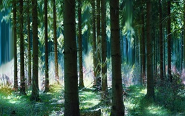 Forest, trees, summer, art magic