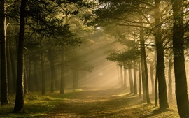 Preview wallpaper Forest, trees, sunlight, nature scenery
