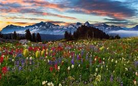 Montanhas, flores, árvores, nuvens, pôr do sol