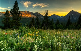 Nature landscape, mountains, wildflowers, trees, dawn