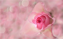 Preview wallpaper Pink flower, rose, bud, petals, flare