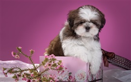 Preview wallpaper Puppy, flowers, box