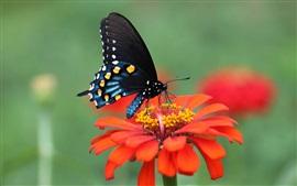 Красный цветок, лепестки, черные крылья бабочки