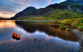 Snowdonia, lac, montagnes, herbe, coucher de soleil, chien