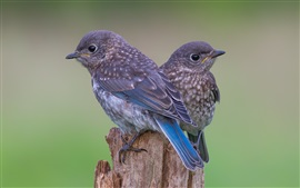 Stump, two birds, blue