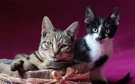 Preview wallpaper Two kittens, box, pose