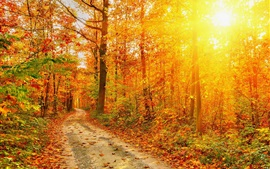 Autumn, forest, road, trees, red leaves, sunlight