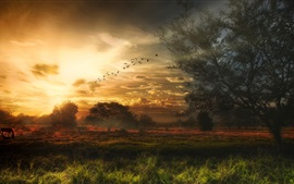 Beautiful sunset scenery, trees, grass, sky, birds, clouds