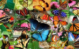 Preview wallpaper Collage, many butterfly, insect