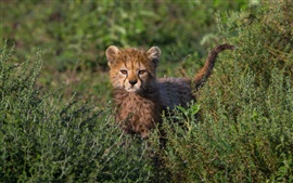 Preview wallpaper Cute cheetah cub, grass, bushes