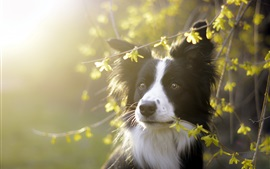 Preview wallpaper Cute dog, twigs, morning, sunlight