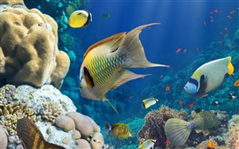 Preview wallpaper Fish, sea, underwater, coral reef