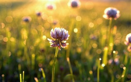 Flowers, bokeh, sunlight, morning