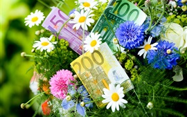 Preview wallpaper Flowers, cornflowers, chamomile, money, Euro