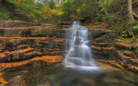 Preview wallpaper Forest, trees, autumn, rocks, waterfall, creek