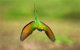 Preview wallpaper Green hummingbird, flight, wings