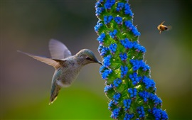 Preview wallpaper Hummingbird, blue flowers, bee