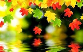 Muchas hojas de arce, la reflexión del agua