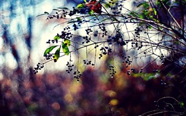 Preview wallpaper Plants, twigs, berries, leaves, drops, bokeh, colors