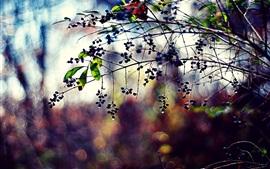 Растения, ветки, ягоды, листья, капли, боке, краски