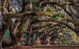 Preview wallpaper South Carolina, Charleston, USA, trees, spring