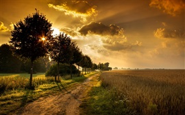 Preview wallpaper Sunset, road, trees, fields