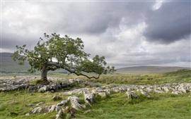 Tree, field, rocks, nature landscape