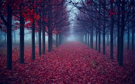 Preview wallpaper Trees, red leaves, road, fog, autumn