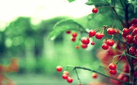 Preview wallpaper Twigs, red berries, leaves, blur