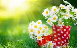 Preview wallpaper White daisy flower, cup, grass, summer, sunlight