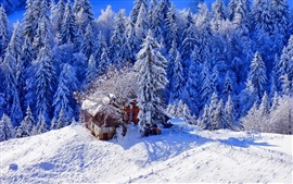 Preview wallpaper Winter, thick snow, trees, house, footpath