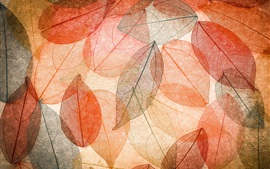 Autumn, transparent leaves, abstract, colorful