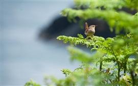 Pássaro, verão, galhos, verde
