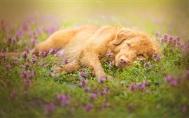 Preview wallpaper Brown color dog, lying grass, flowers