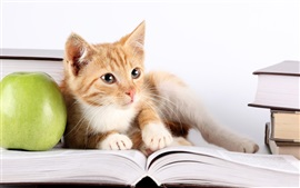 Cat look at book, green apple