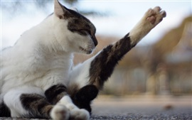 Preview wallpaper Cat stretch foot