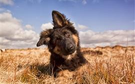 Собака вид спереди, лето, трава