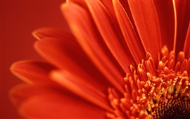 Preview wallpaper Flower macro, red petals