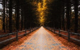Preview wallpaper Forest, trees, leaves, autumn, road, fence