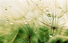 Grass, drops, rain, macro photography