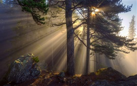 Preview wallpaper Morning forest, sun rays, trees, rocks