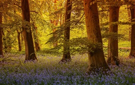 Preview wallpaper North Yorkshire, England, trees, flowers