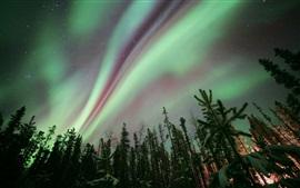 Aurora boreal, noite, floresta, árvores, estrelas