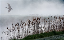 Preview wallpaper Reeds, lake, fog, duck fly