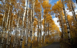 Preview wallpaper Road, birch, autumn