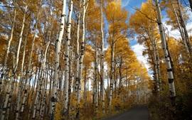 Aperçu fond d'écran Road, bouleaux, automne