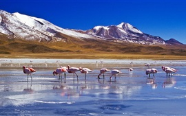 Preview wallpaper Snow, mountains, lake, birds, flamingos