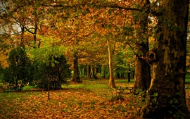 Spain, Madrid, Campo, autumn, park, leaves, trees, nature